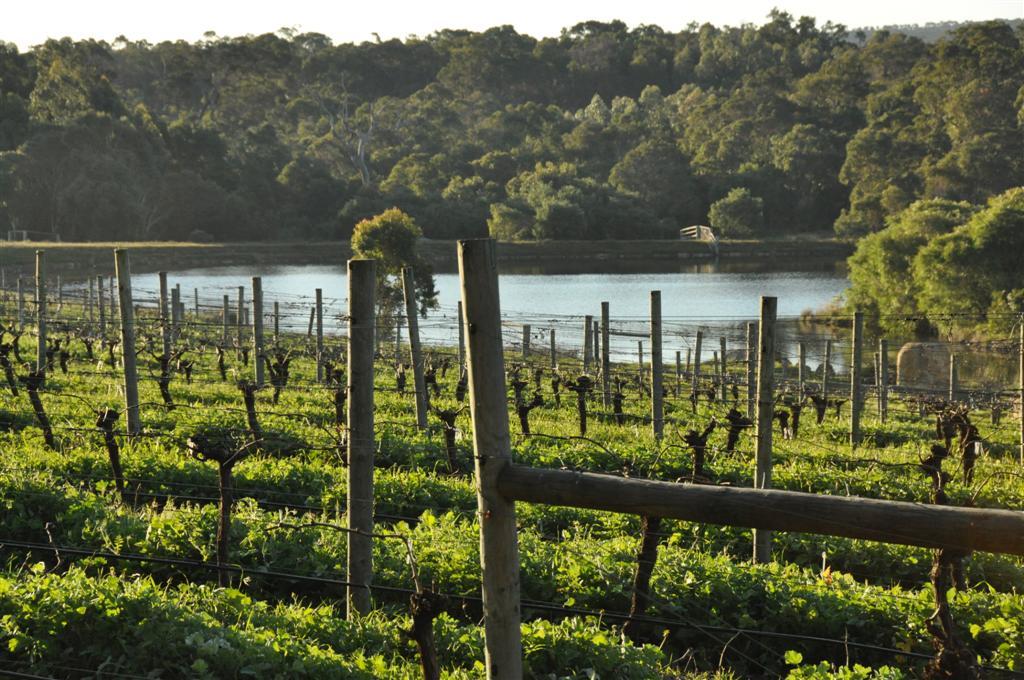 Vineyards in Yallingup
