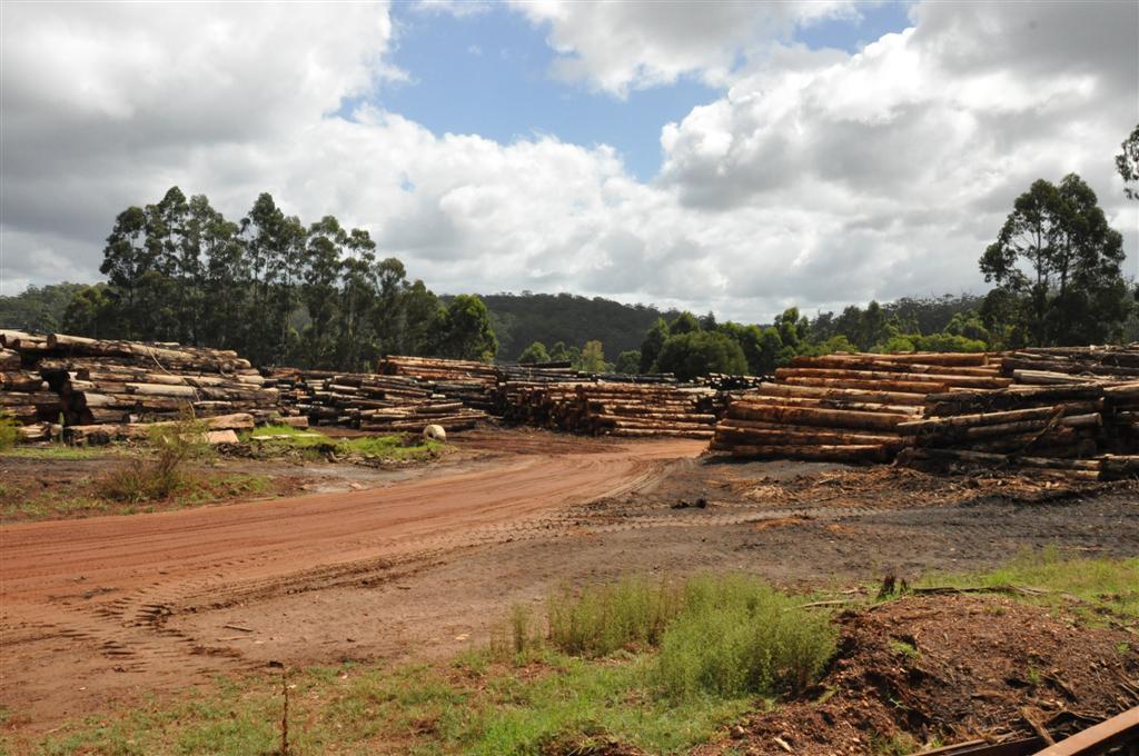 Logging in Pemberton