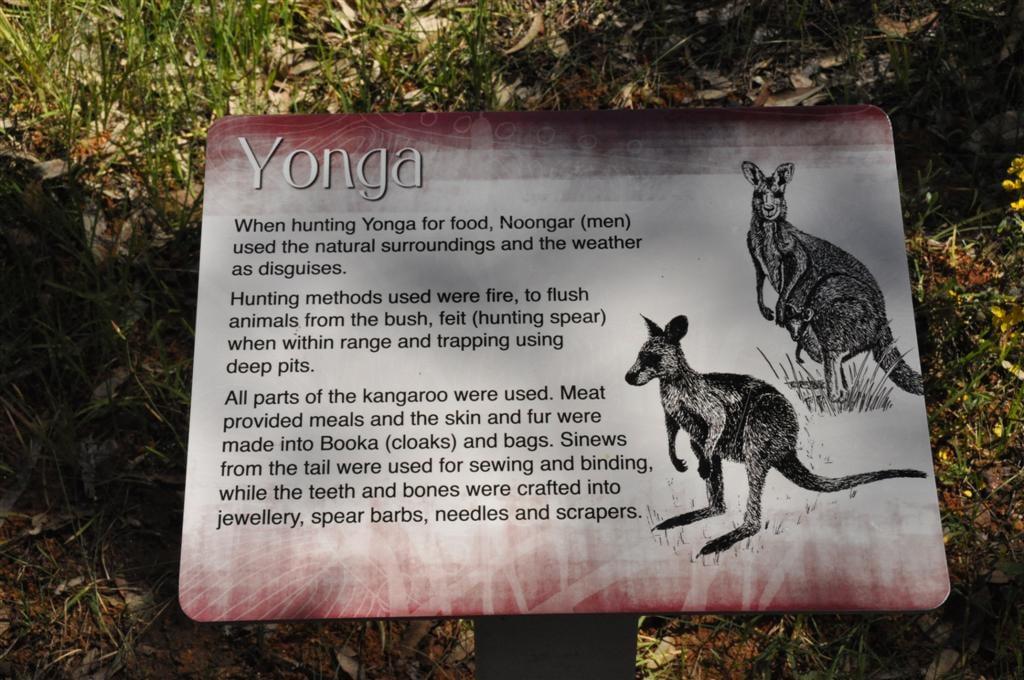 Yonga Kangaroos