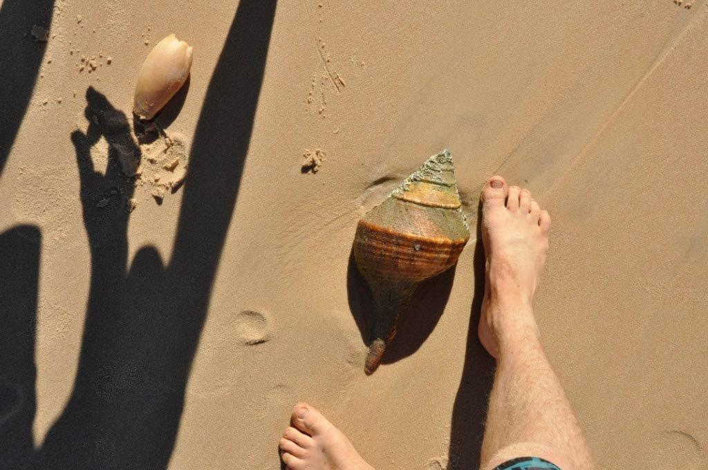 A Massive Shell at Shark Bay