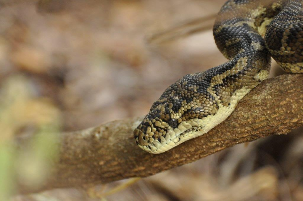 A Snake in Albany