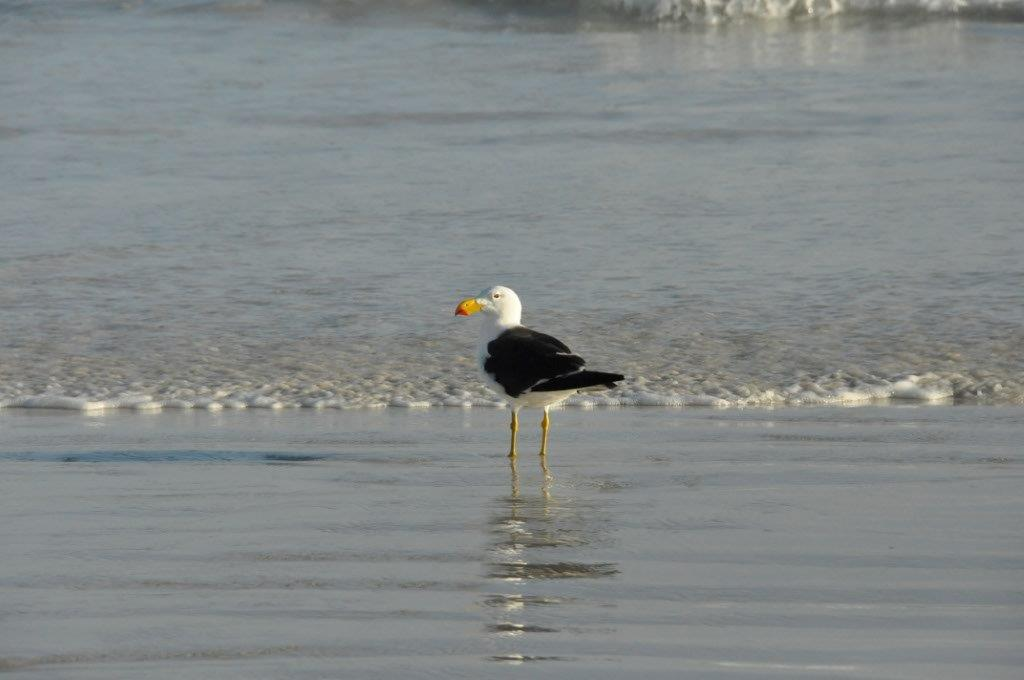 Big Birds on the Beach