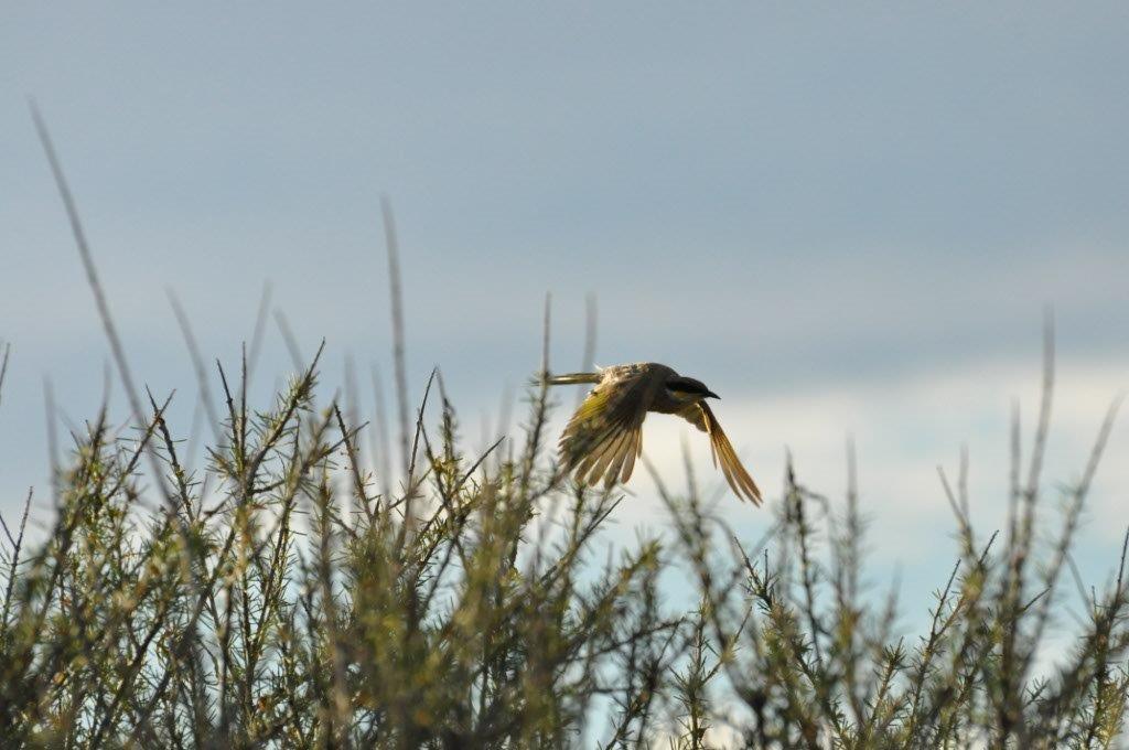Birds at Shark Bay