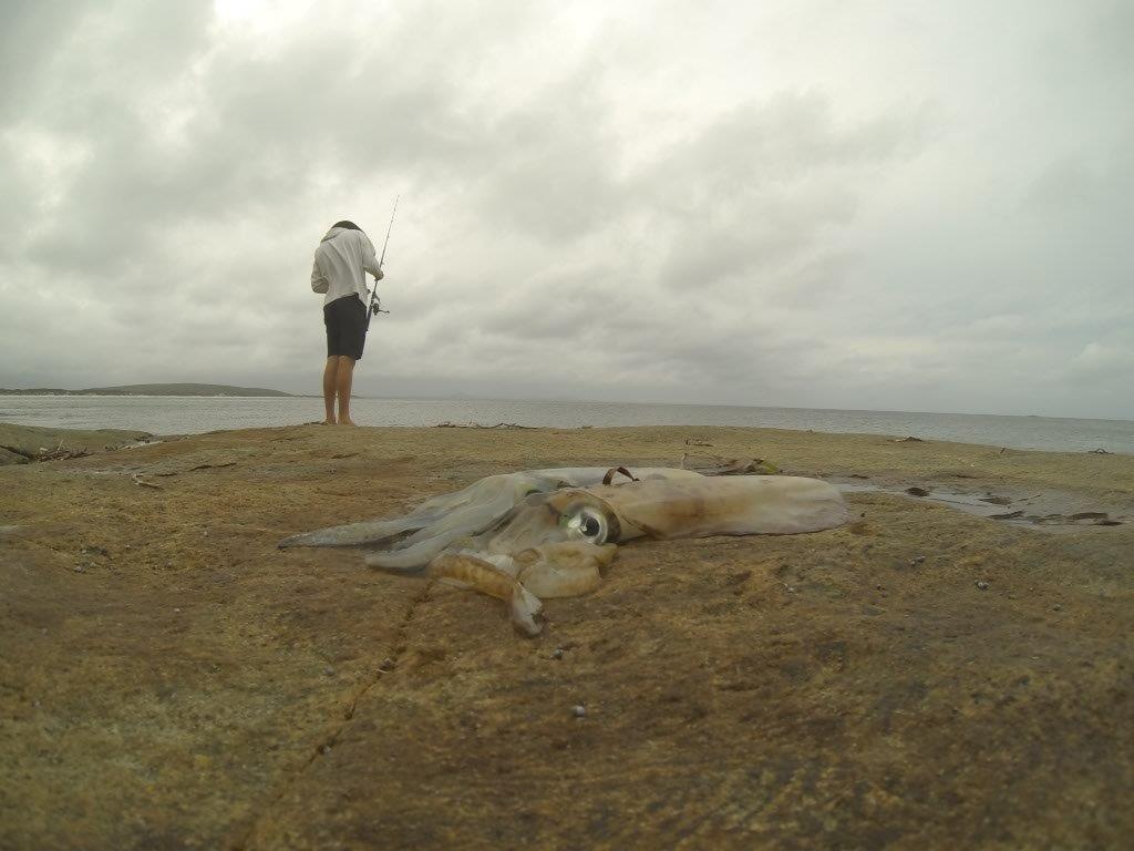 Bremer Bay Squid Fishing