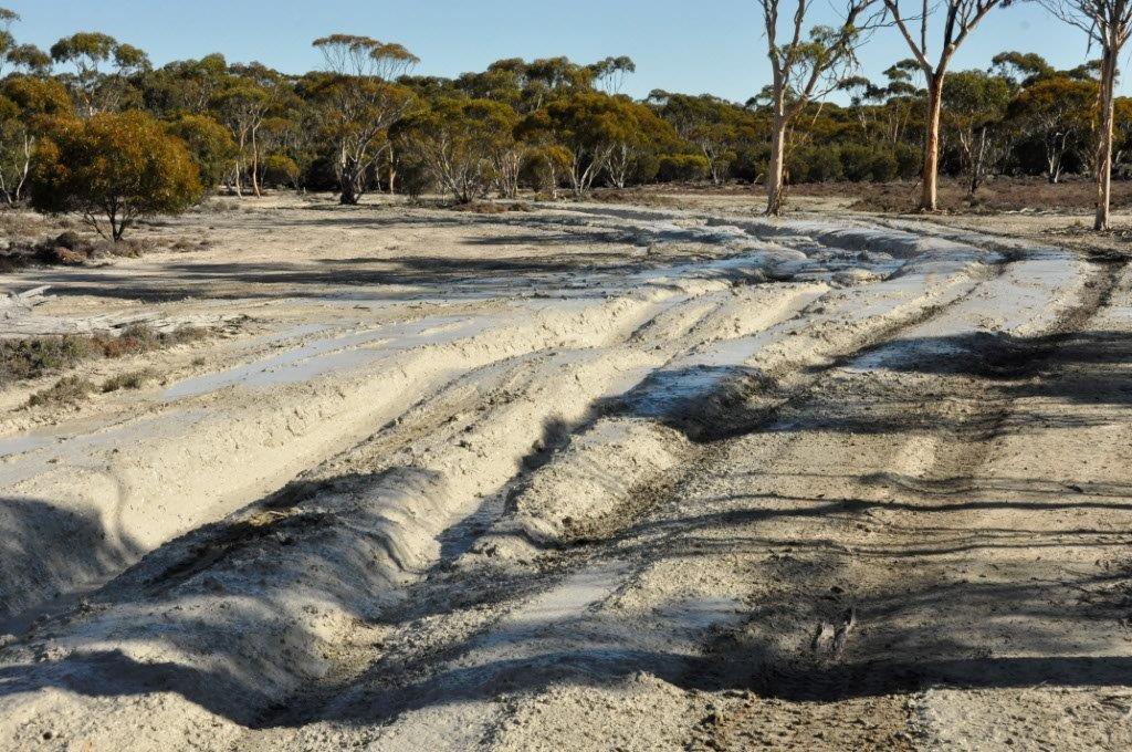 Clay Mud Tracks
