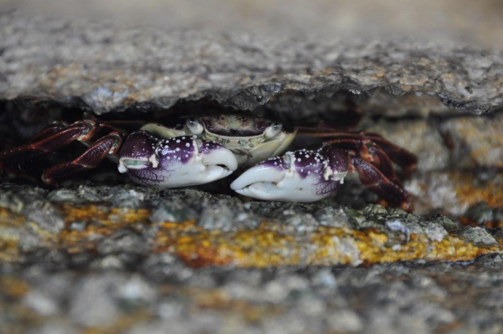 Crabs in Esperance