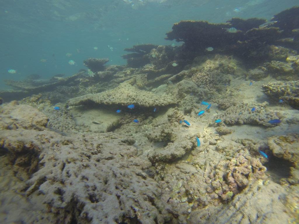 Diving at Gnaraloo Station