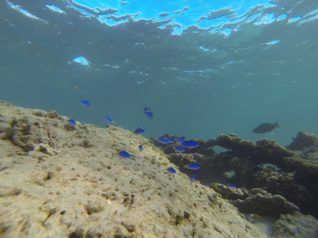 Diving at Gnaraloo