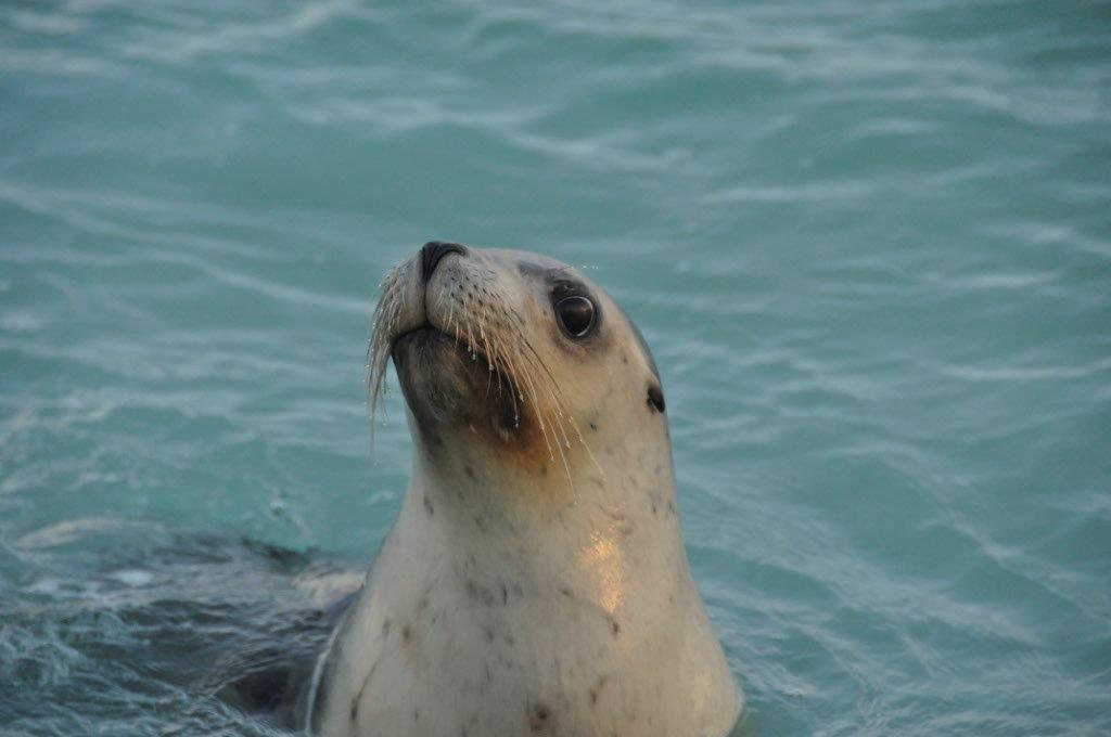 Enjoying the Seal