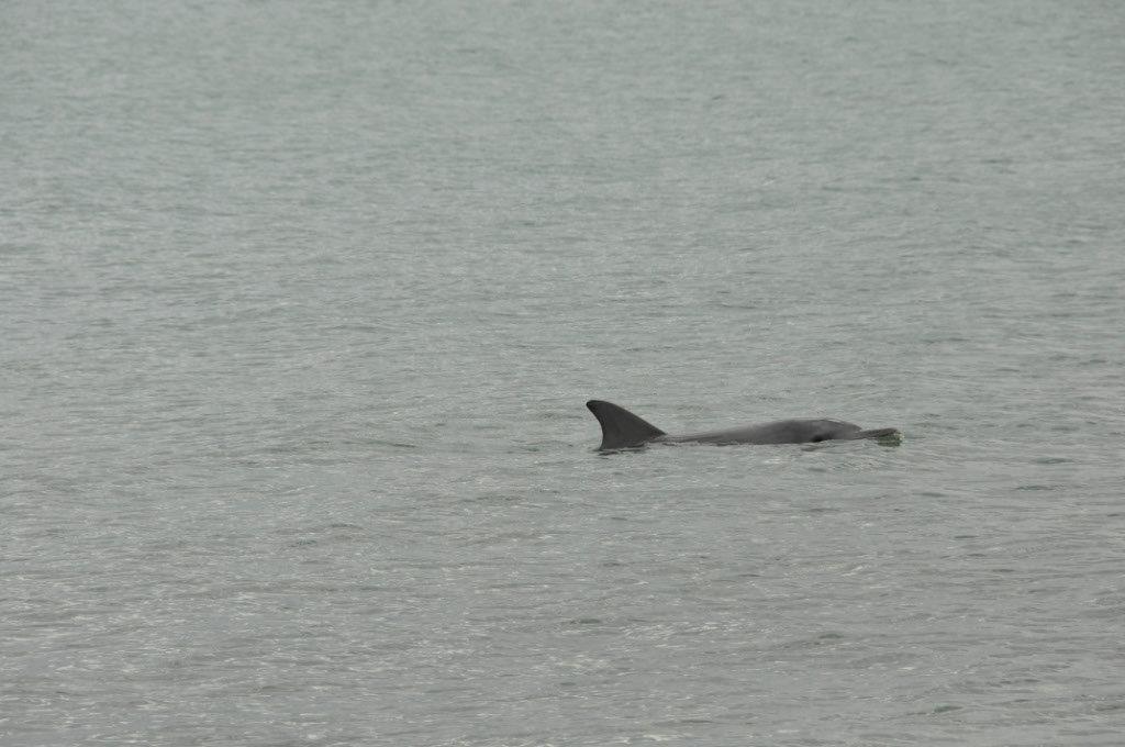 Friendly Dolphin at Shark Bay