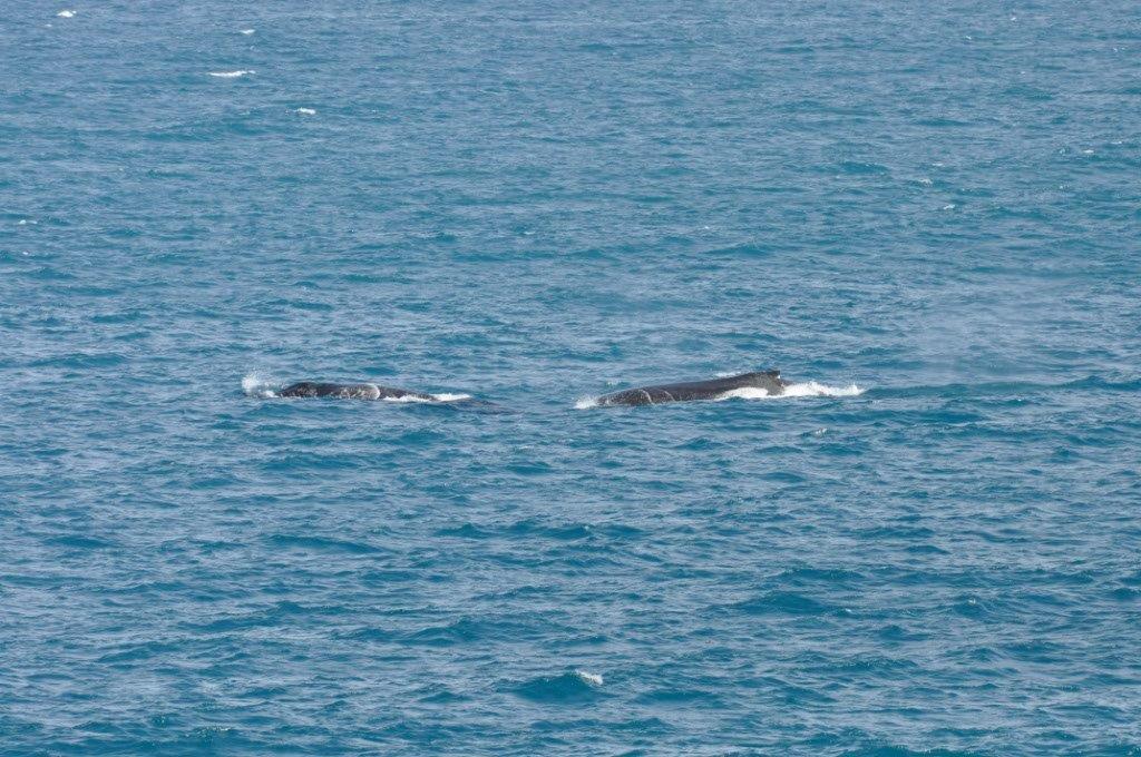 Gnaraloo Whale Splash