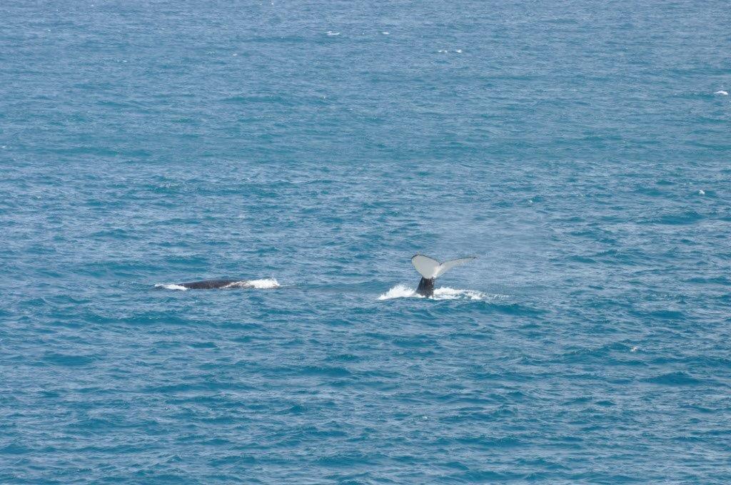 Gnaraloo Whale Watching