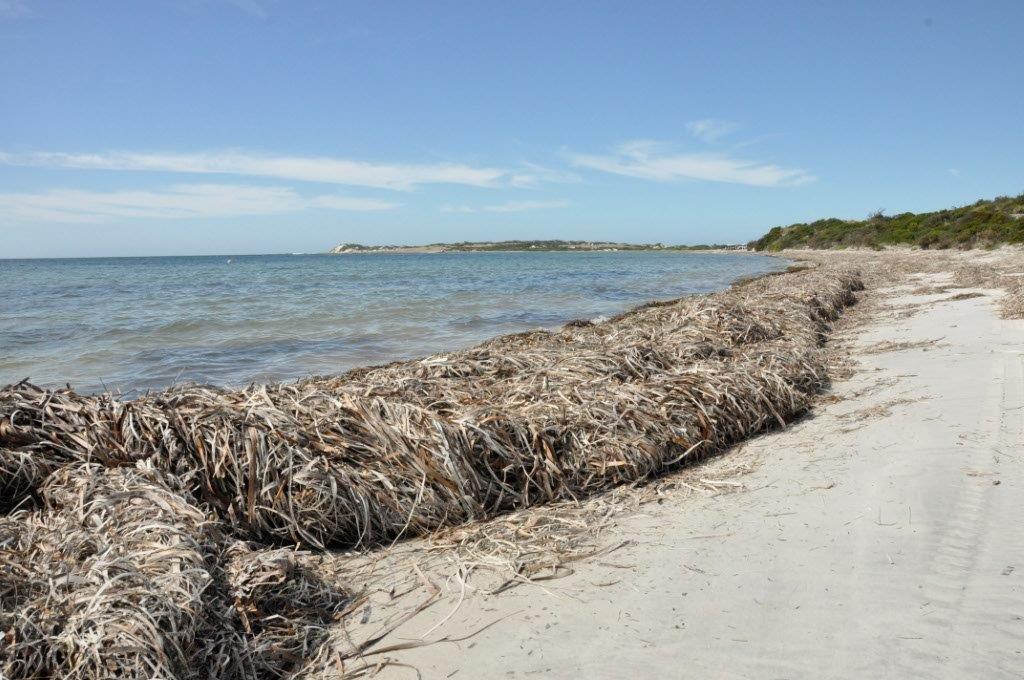 Seaweed at Israelite Bay