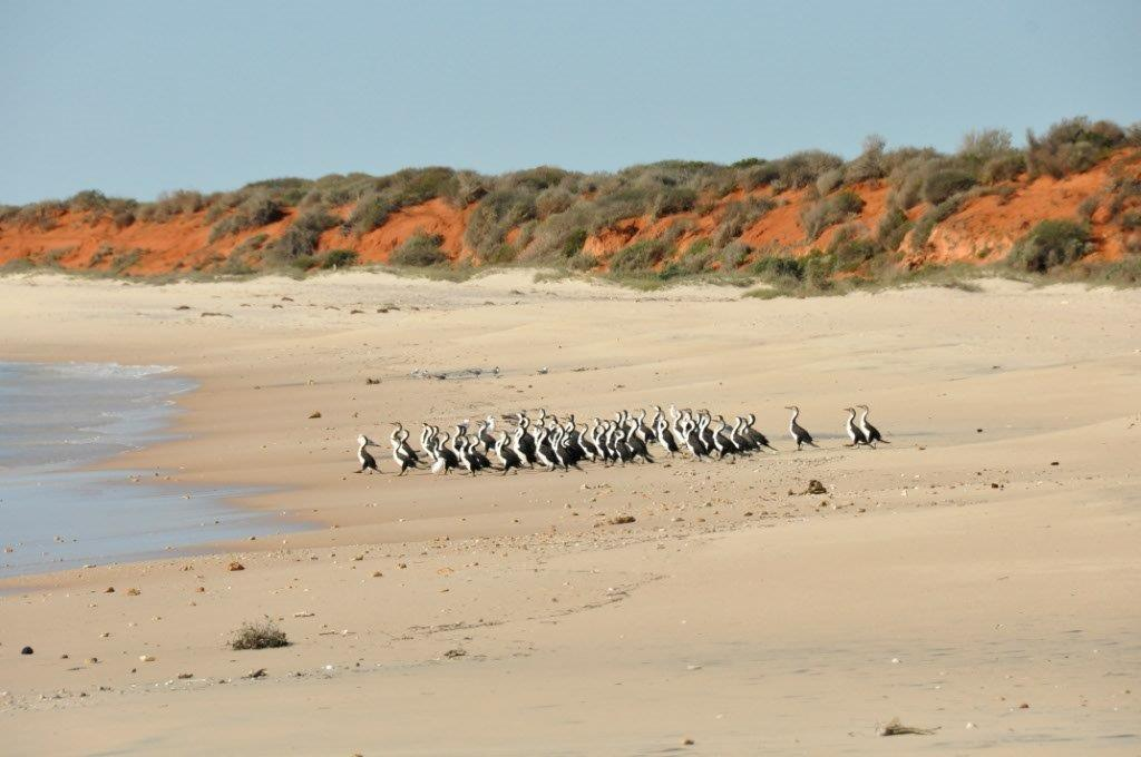 Shark Bay Birds