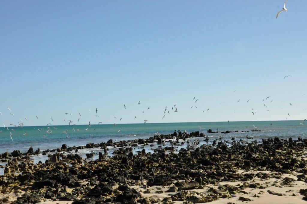 South Gregories Birds
