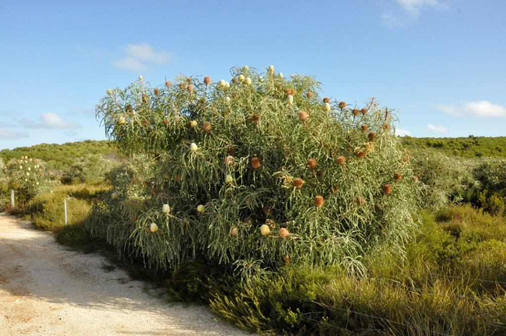Stokes Flora