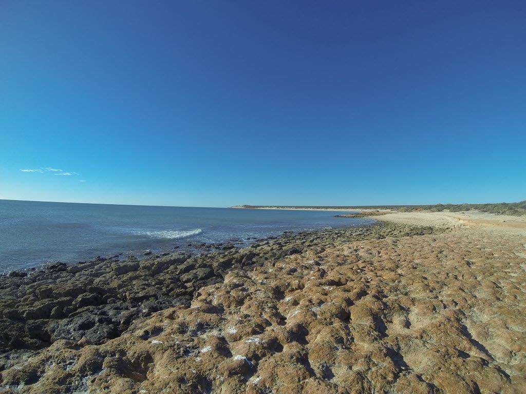 Weird Formations at Shark Bay