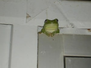 A green frog enjoying the weather