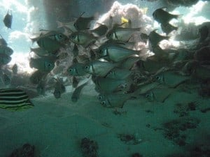 A school of fish in a cave underwater