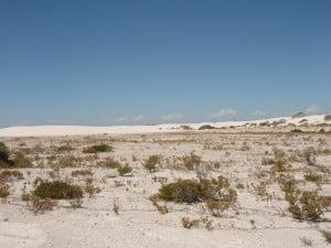 Sandy Cape Dunes