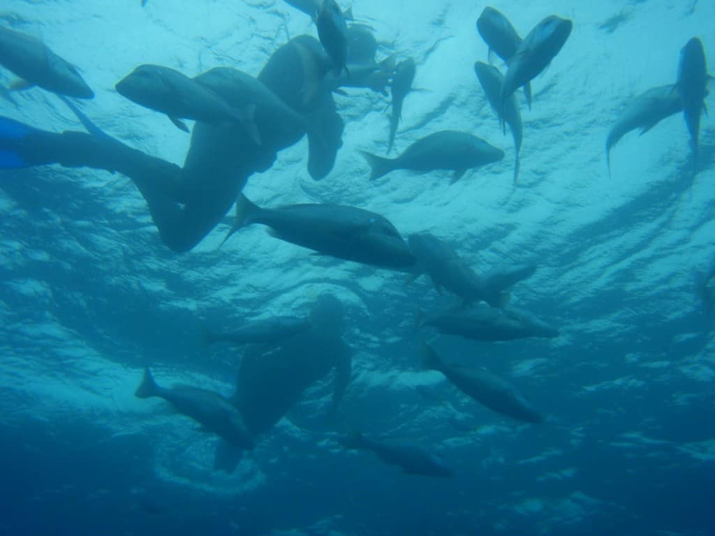 Masses of Fish