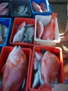 Results of a Charter at Coral Bay