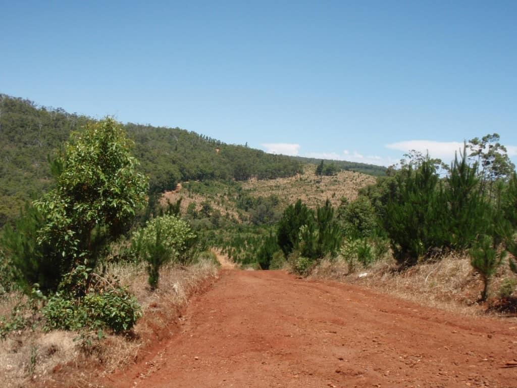 Typical WA Bushland