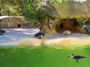 Penguins relaxing