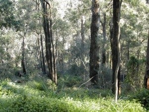 Much of Araluen is native bushland