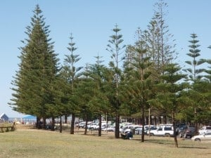 Plenty of Lawn to relax on near the beach