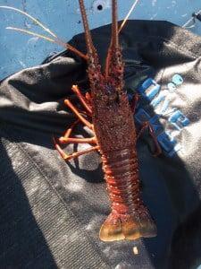 A crayfish we caught near Carnac