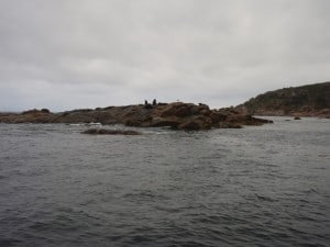 Seal Island is well worth a look