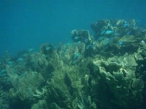 See some amazing marine life