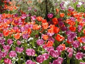 Araluen Wild Flowers