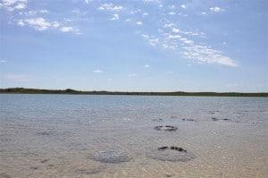 Stromatolites at Cervantes
