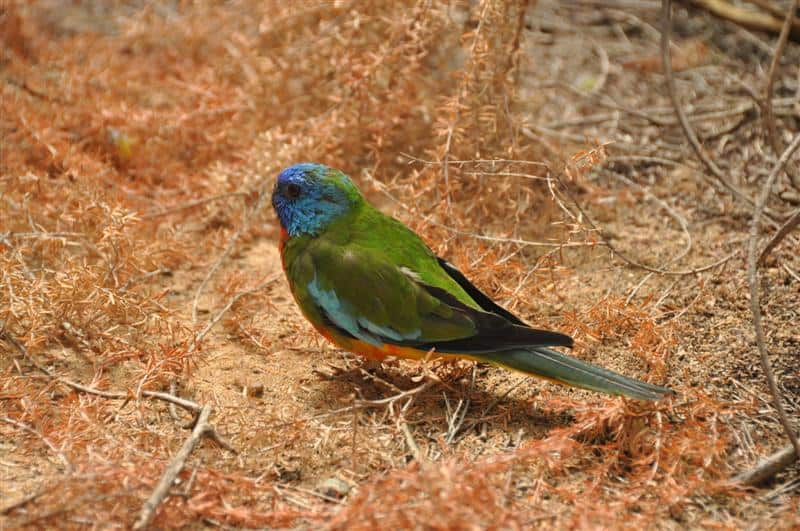 A pretty bird in the walk through aviary