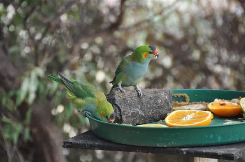 Numerous birds feeding