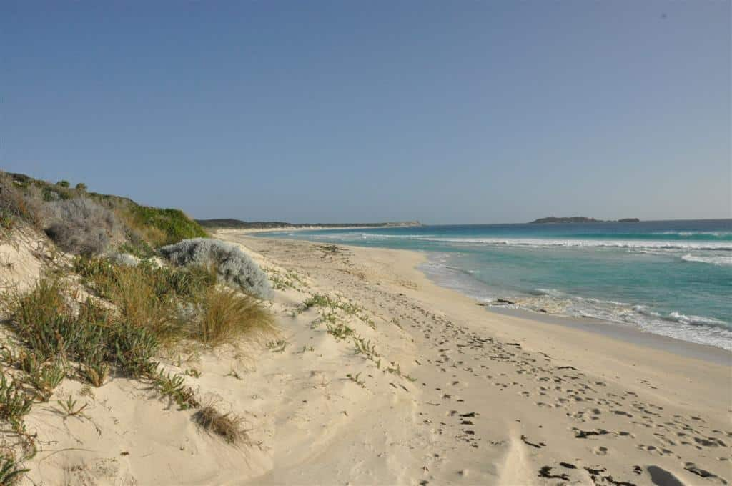 Enjoying the beach near Hamelin Bay