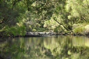 The Warren River is a beautiful place