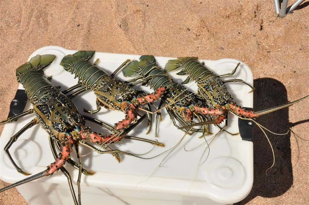 4 Tasty Painted Crayfish