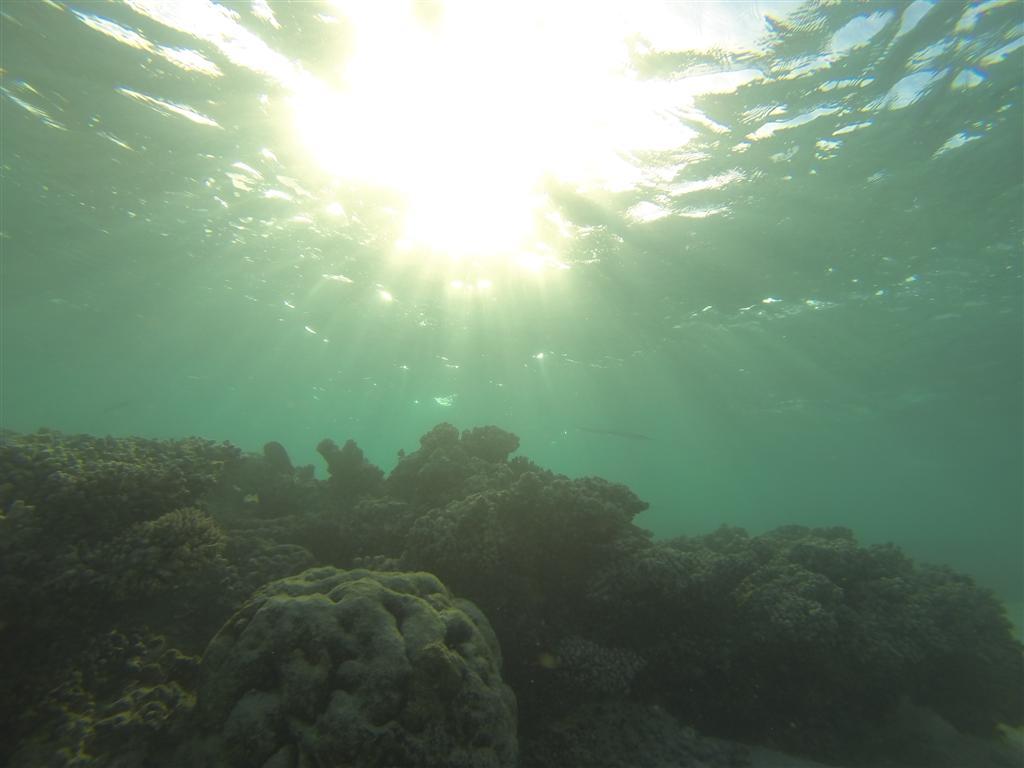 Gnaraloo Diving