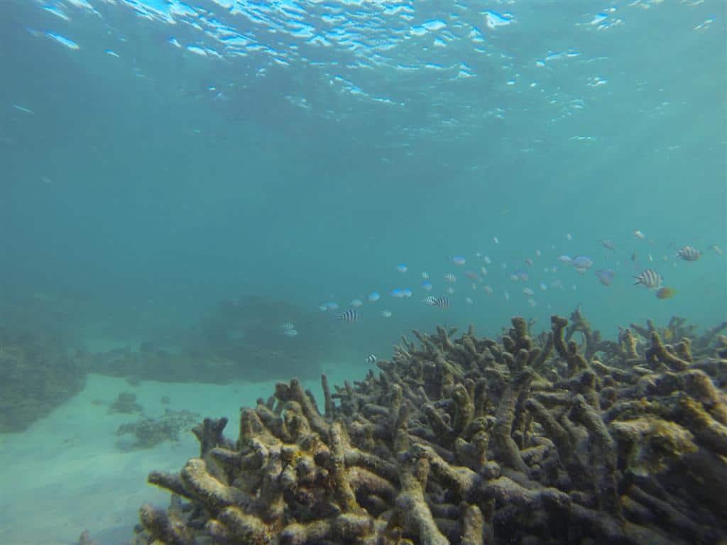 Fish were plentiful at Gnaraloo