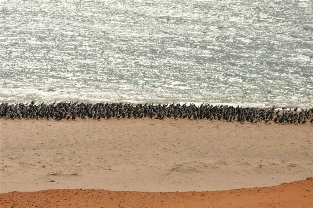 The birds at Cape Peron were insane