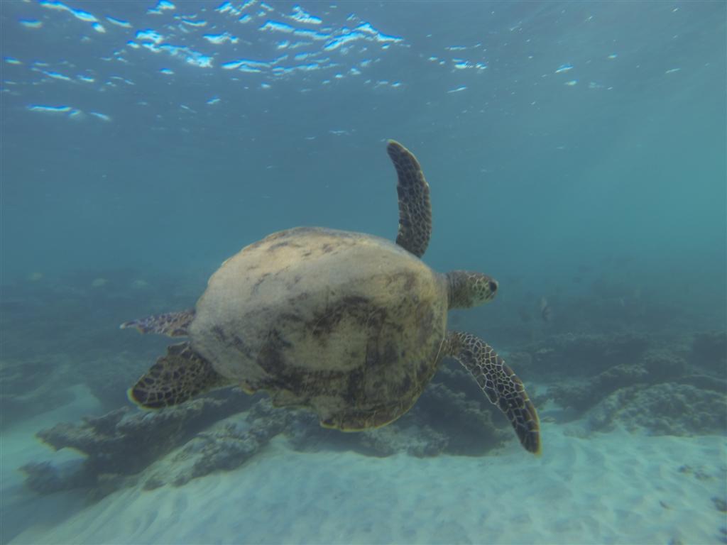 Enjoying the company of a turtle