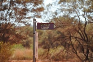 Dales Campground Loops