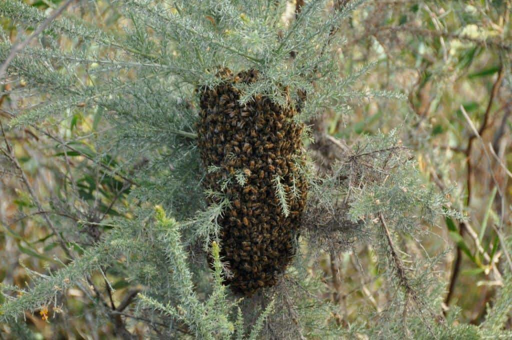 Stokes National Park Bee Hive