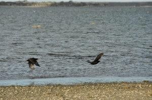 Stokes National Park birds