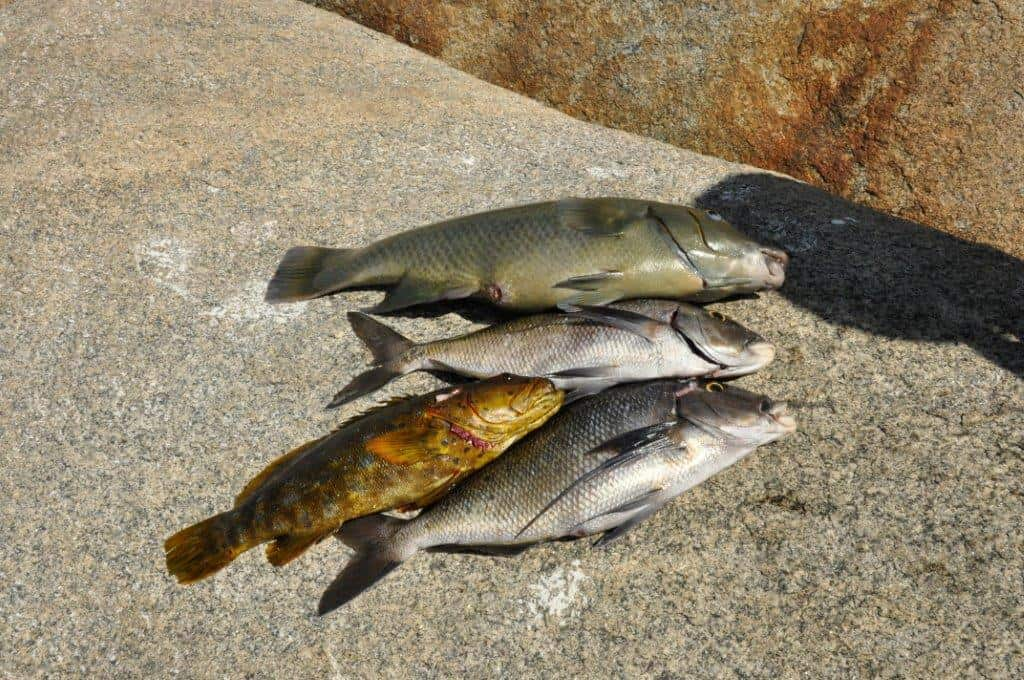 More fish from Esperance