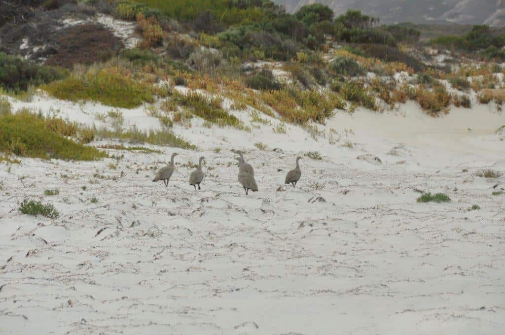 Plenty of wildlife around Esperance