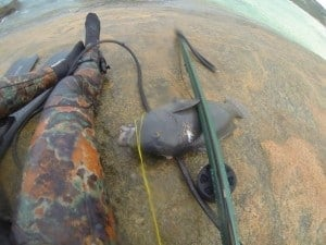 Groper spearfishing Esperance